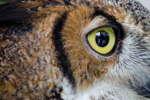 eye-wildlife-medium